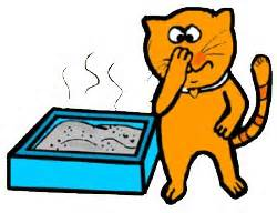 cat with stinky box
